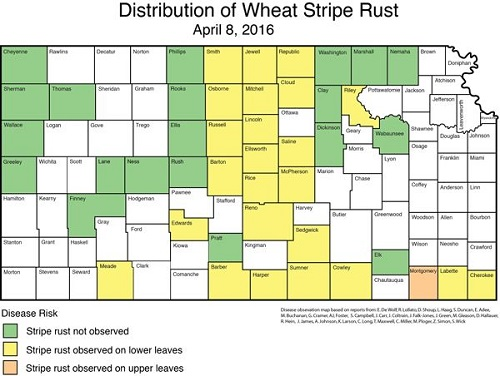 stripe rust map 4-8-16