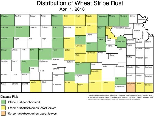 dist map of stripe rust 4-1-16