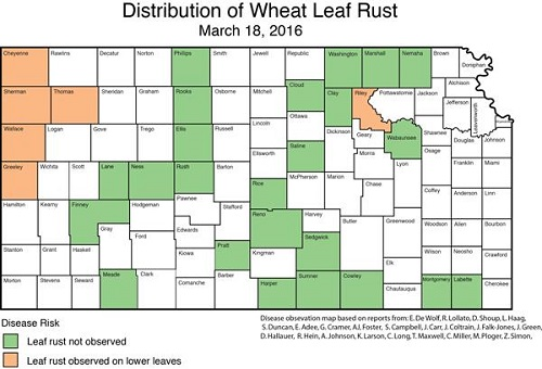 distribution of wheat leaf rust 031816