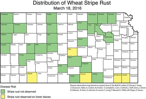 Distribution of wheat stripe rust 031816