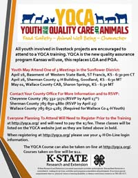Youth Quality Care