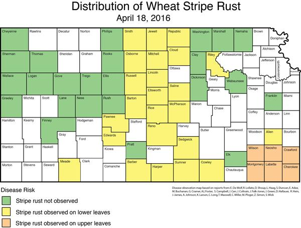 Distribution of Stripe Rust 4-18-16