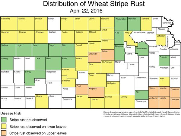 Distribution of Stripe Rust 4-22-16