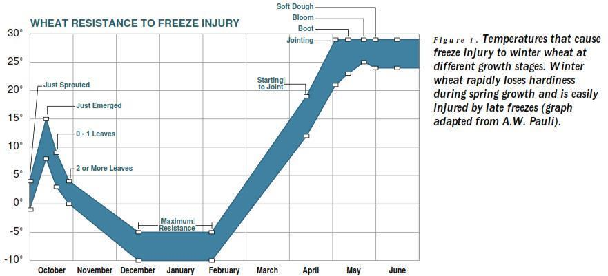 Freeze Injury Chart