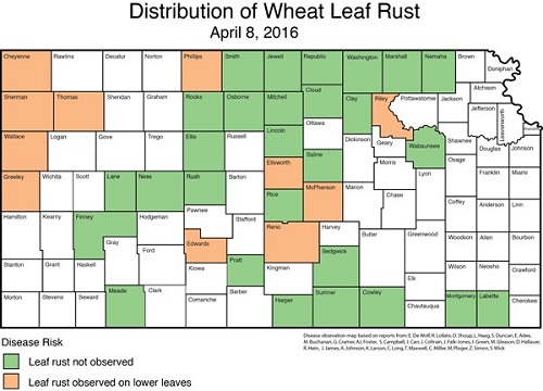 leaf rust distribution map 4-8-16